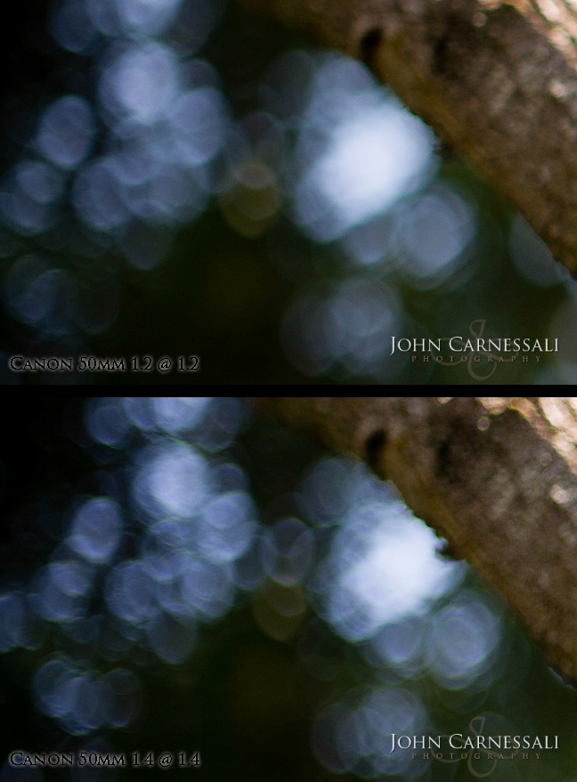Review and Tests comparing the Canon 50mm 1.4 vs Canon 50mm 1.2 Bokeh