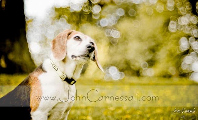 Syracuse Pet and Portrait Photography Studio